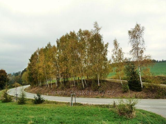 Pastviny -břízy u silnice do Vlčkovic nad Vitanovem