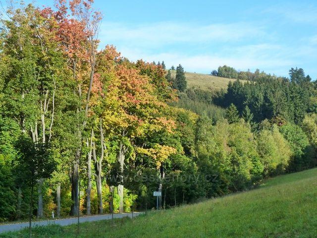 Petrovičky - podzim na silničce pod Adamem