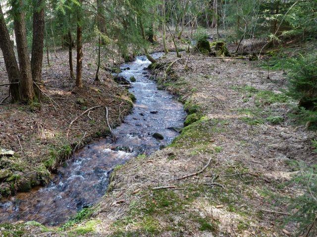 Horní Orlice - Tichá Orlice v podobě lesní bystřiny