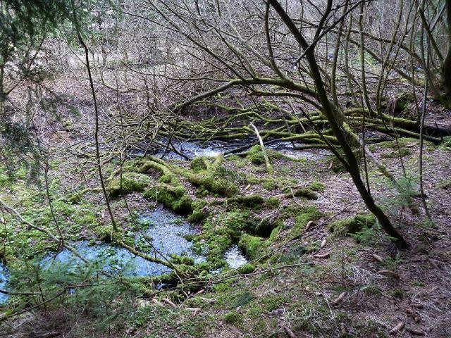 Horní Orlice - jedna z podob horního toku Tiché Orlice