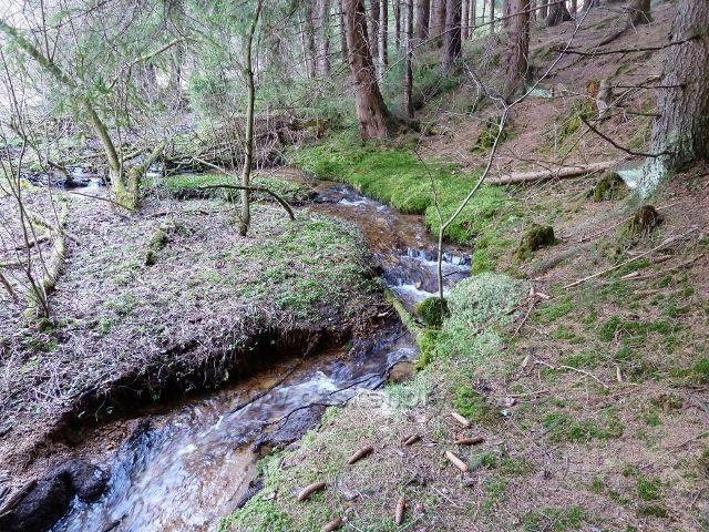 Horní Orlice - horní tok Tiché Orlice