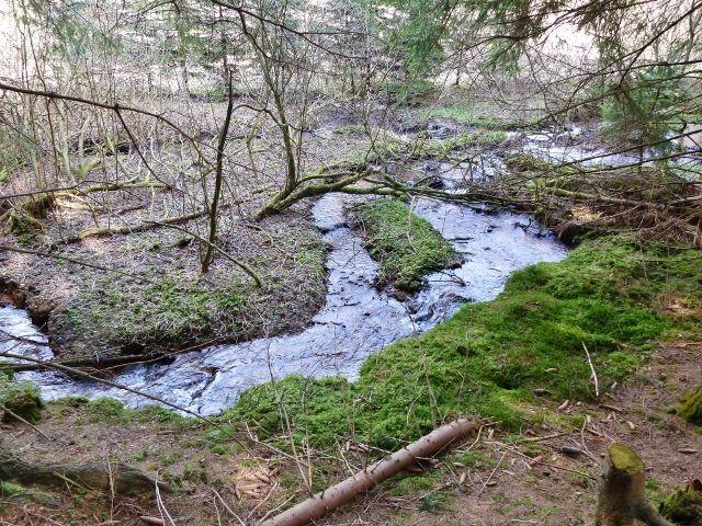 Horní Orlice - další z podob horního toku Tiché Orlice