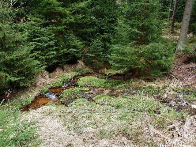 Horní Orlice - Tichá Orlice co by lesní potok v sedle pod Jeřábkem