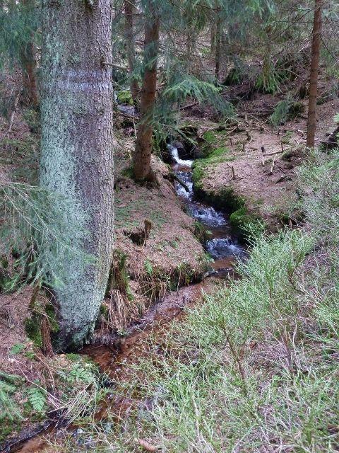 Horní Orlice - tento lesní potůček je Tichá Orlice necelý kilometr pod svým pramenem
