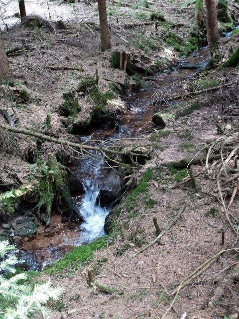 Horní Orlice - Tichá Orlice necelý kilometr pod svým pramenem