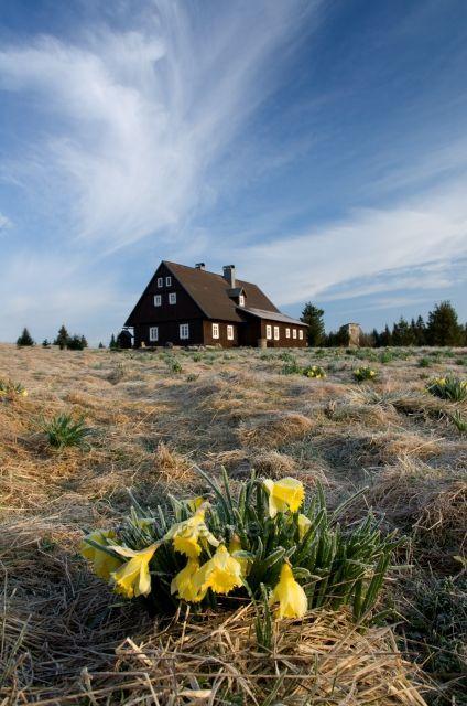 Hnojový dům - s narcisovou loukou jako vzpomínka na majitele - Gustav Ginzel.