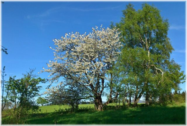 jaro kolem Hanušovic..