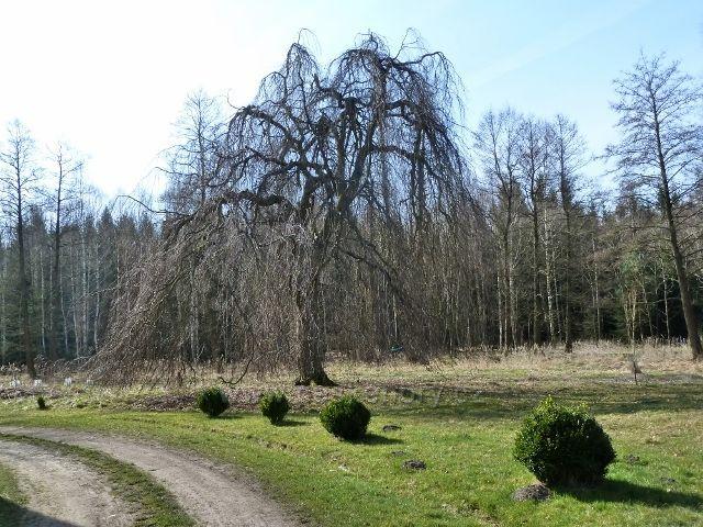 Sklenářka - park kolem vily