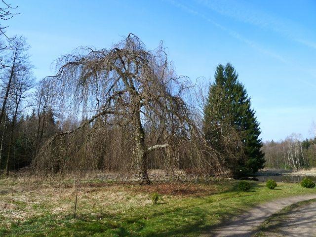 Sklenářka - park s jezírkem