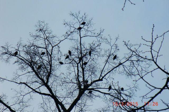 ptáci...