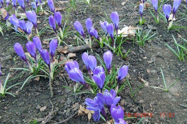 jaro v Karlových Varech