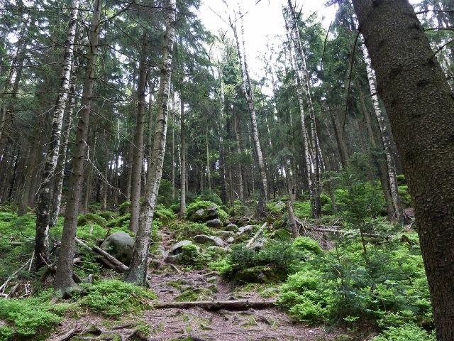 Teplické skály - trasa sestupu po zelené TZ z Čápu do Teplického údolí
