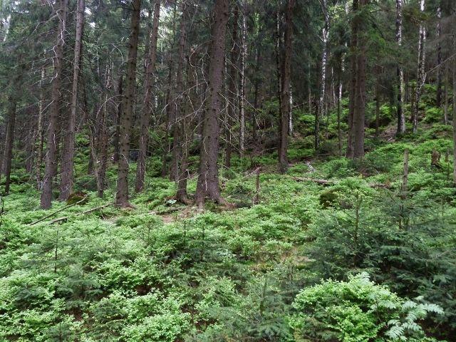 Teplické skály - z trasy sestupu po zelené TZ z Čápu do Teplického údolí