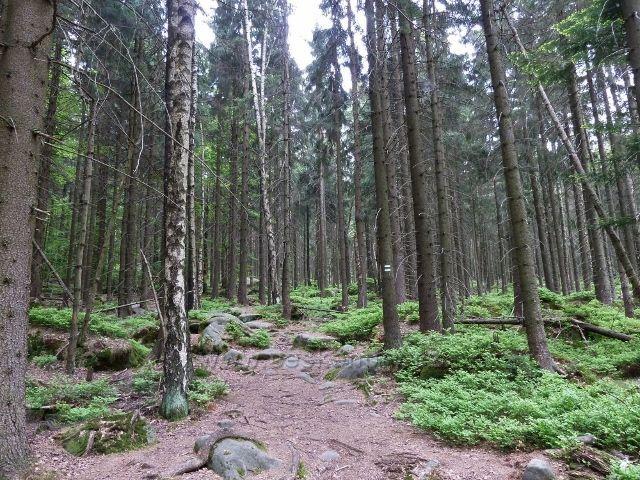 Teplické skály . trasa sestupu po zelené TZ z Čápu do Teplického údolí
