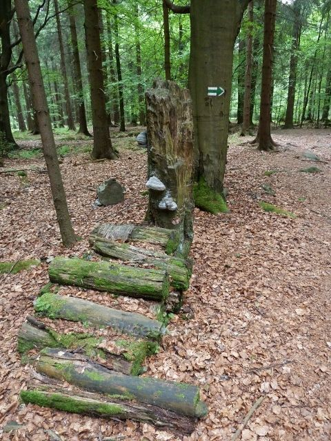 Teplické skály - konec sestupu z Čápu po zelené TZ do Teplického údolí