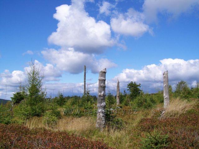 na vrcholu Smrk v Rychlebských horách....