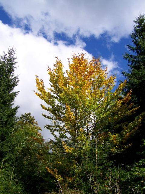 a začíná podzimní vybarvování......