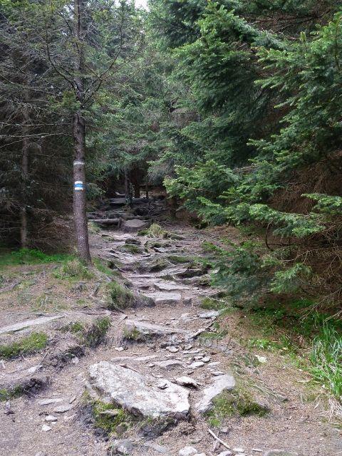 Ramzová - turistická stezka po modré TZ z Obřích skal na Šerák