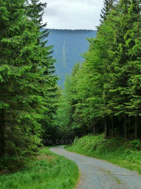Sestup do údolí Keprnického potoka