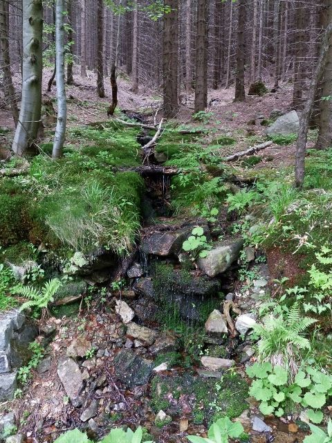 Jeden z mnoha přítoků Keprnického potoka