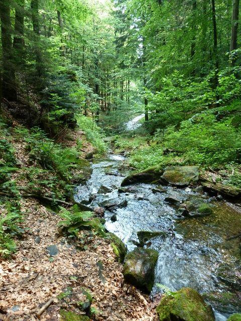 Nýznerovské vodopády - Stříbrný potok pod soutokem s potokem Bučínským