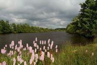 Dlouhý rybník na Cínovci