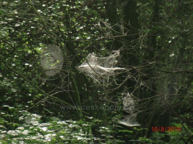 pavučin plný les