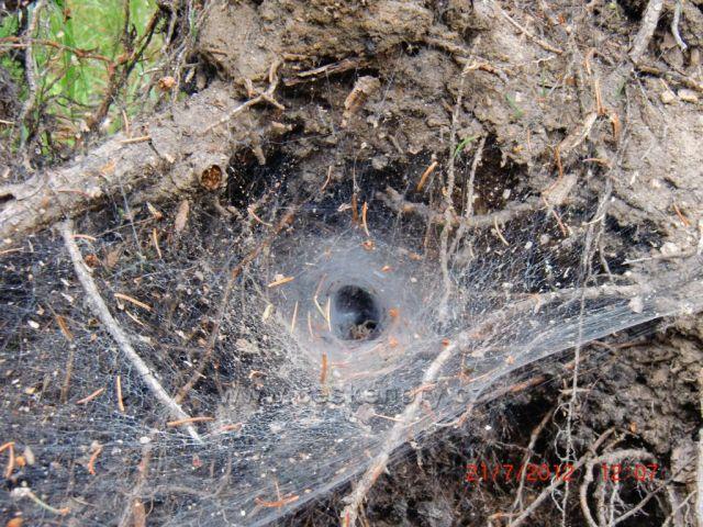 pavoučí obydlí