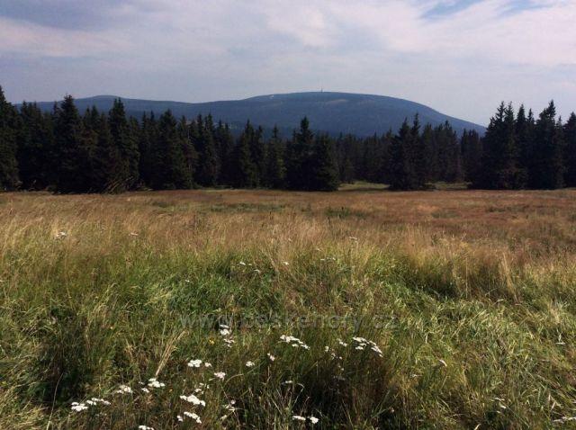 Černá hora od Lesní boudy