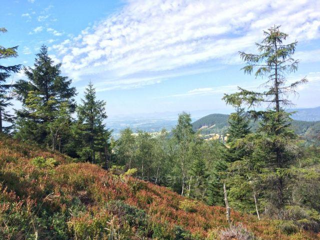 Borůvkové a brusinkové plantáže pod Ještědem