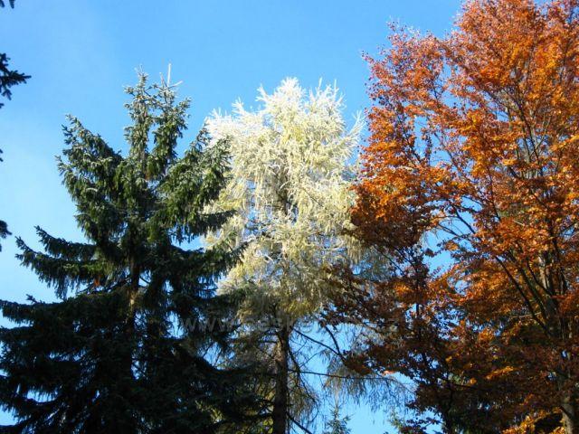 podzimní hra barev, Jizerky