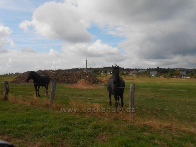 Koně na Cínovci