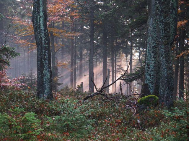 Podzim cestou na Praděd