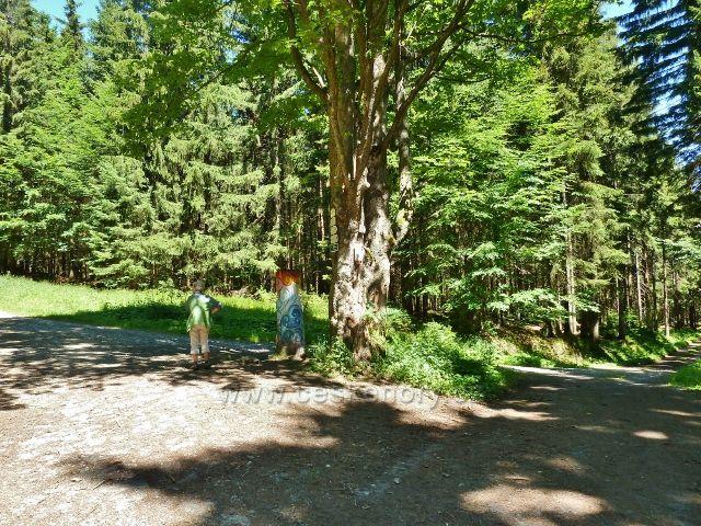 Lázně Jeseník - křižovatka lesních cest Nad Večerním pramenem