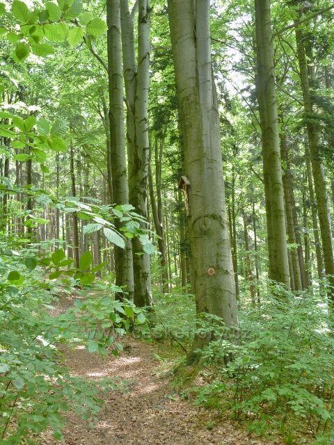 Lázně Jeseník - stezka k Polskému pramenu vede kolem Viktorova kříže