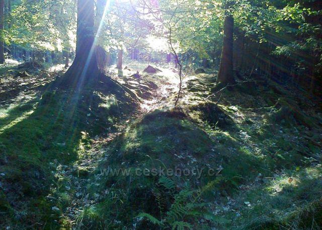Podzimní ráno v lese na Majlantu