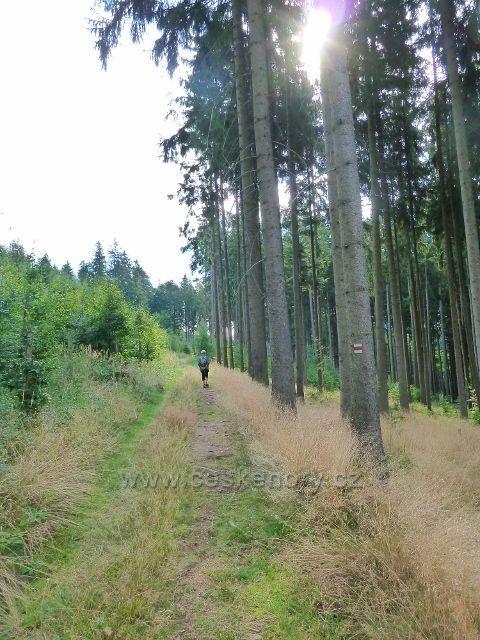Hradiska - cesta po červené TZ do Orliček