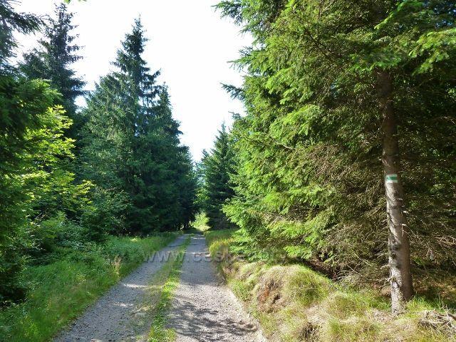 Buková hora - po cyklostezce 4071 a zelené TZ  k vrcholu Bukové hory