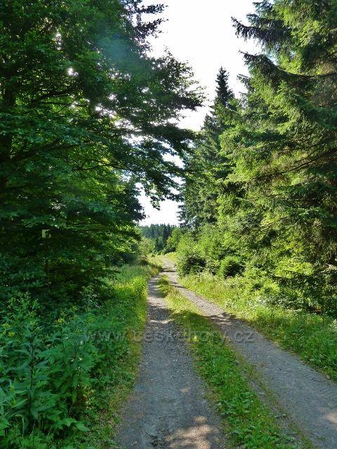 Buková hora - neznačená cesta z Náměstíčka
