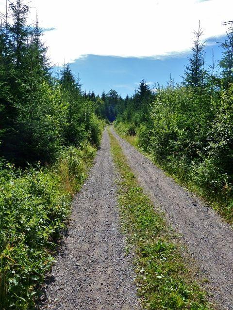 Buková hora - neznačená cesta z Náměstíčka k vrcholu Bukové hory