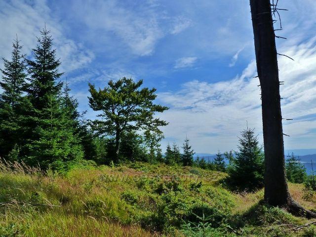 """Buková hora - boční vrchol """"Na Planiskách"""" 833 m.n.m."""