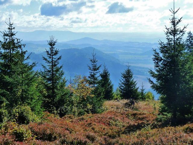 Buková hora - pohled z vrchu Na Planiskách k Hanušovické pahorkatině a Jeseníkům