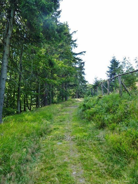 Buková hora - poslední úsek cesty po zelené TZ k vrcholu