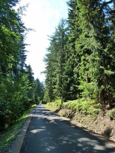 Buková hora - vrstevnicová silnička po úbočí Bukové hory