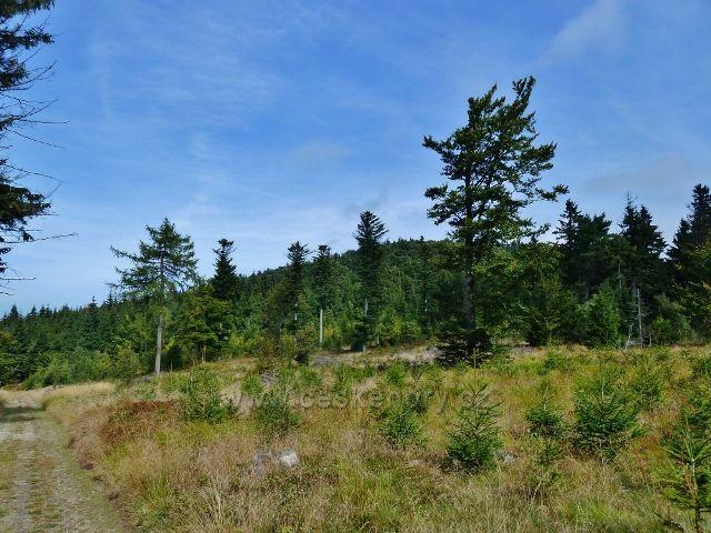 Buková hora -lesní partie kolem cyklostezky 4071 do Mlýnického Dvora