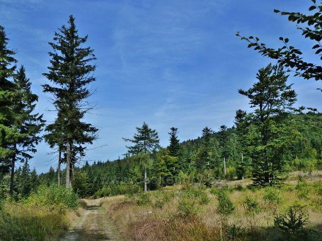 Buková hora - lesní partie kolem cyklostezky 4071 do Mlýnického Dvora