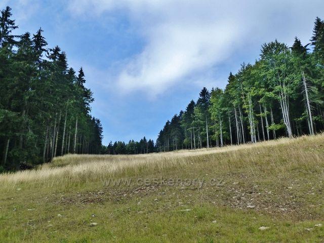 Buková hora - pohled na sjezdovku k Mlýnickému dvoru