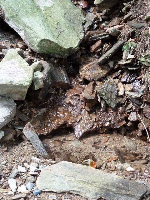 Buková hora - polovyschlý potok u cyklostezky 4071 do Mlýnického Dvora
