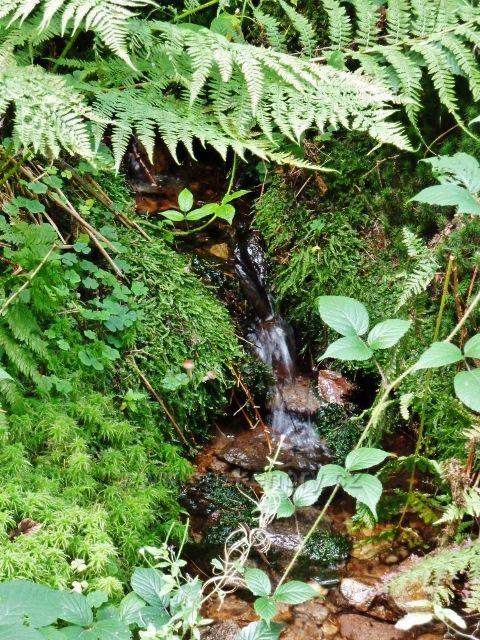 Buková hora - lesní potůček na úpatí Bukové hory