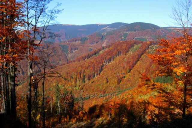 Zbarvené stráně nad Vernířovicemi